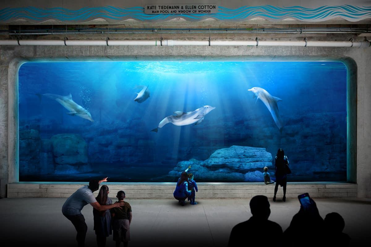 Clearwater Marine Aquarium renovation   Colorful ...